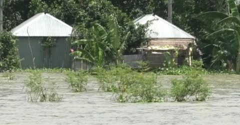 গাইবান্ধায় ব্রহ্মপুত্রের পানি বিপদসীমার উপর দিয়ে প্রবাহিত